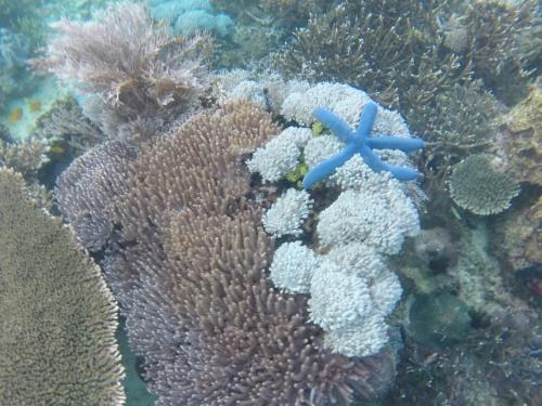Snorkeling in Flores Islands