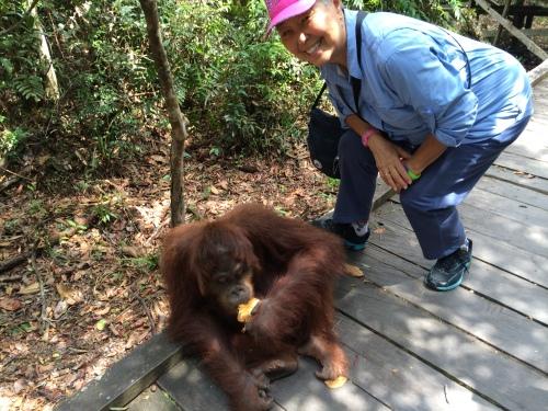 Atlas, the orangutan in Tanjung Puting National Park