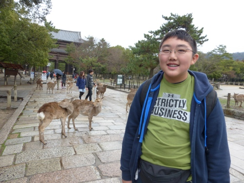 Hungry deer at Nara, Todaiji temple