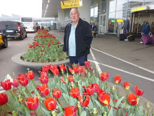 Tulips at Schiphol Airport
